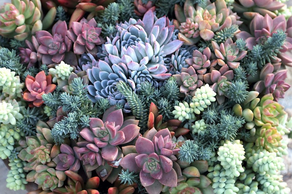 Staying Power - Spring Pot of Succulents